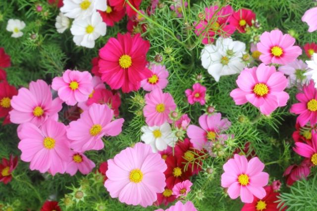 10月生まれの人に贈りたい花は?誕生日にピッタリな花言葉もご紹介