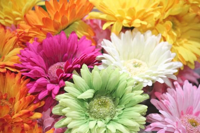 10月に咲く花と言えば何?花の特徴や花言葉も合わせてご紹介!