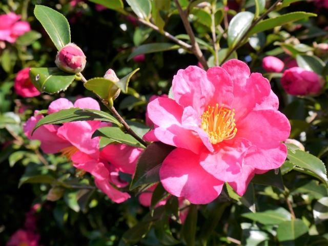 11月に咲く花と言えば何?花の特徴や花言葉も合わせてご紹介!