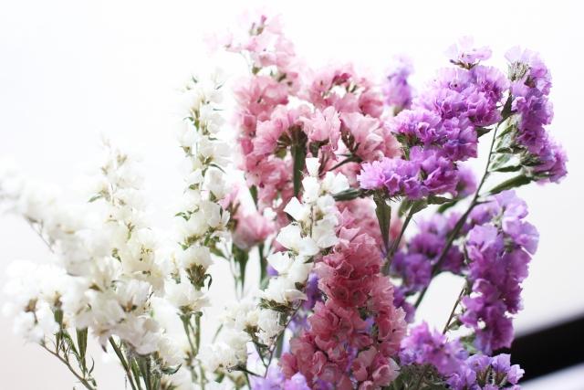11月生まれの人に贈りたい花は?誕生日にピッタリな花言葉もご紹介
