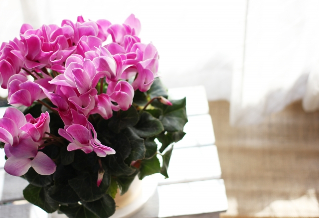 12月生まれの人に贈りたい花は?誕生日にピッタリな花言葉もご紹介