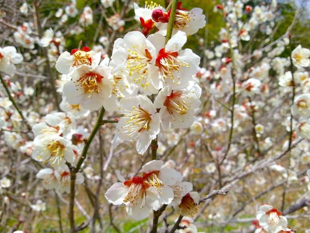 1月に咲く花と言えば何?花の特徴や花言葉も合わせてご紹介!