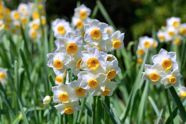 1月生まれの人に贈りたい花は?誕生日にピッタリな花言葉もご紹介