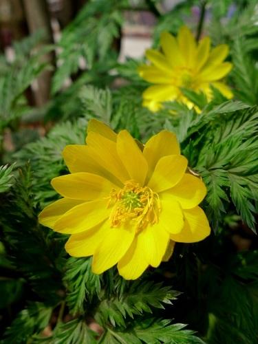 2月に咲く花と言えば何?花の特徴や花言葉も合わせてご紹介!