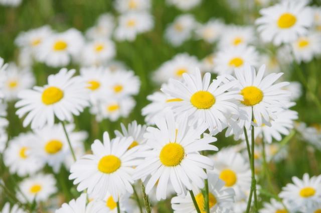 3月に咲く花と言えば何?花の特徴や花言葉も合わせてご紹介!