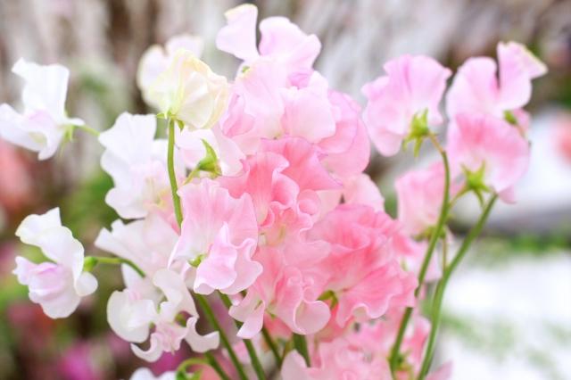 3月生まれの人に贈りたい花は?誕生日にピッタリな花言葉もご紹介
