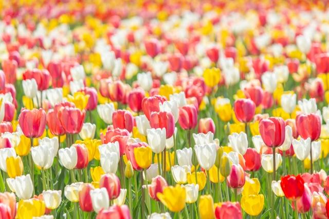 4月に咲く花と言えば何?花の特徴や花言葉も合わせてご紹介!