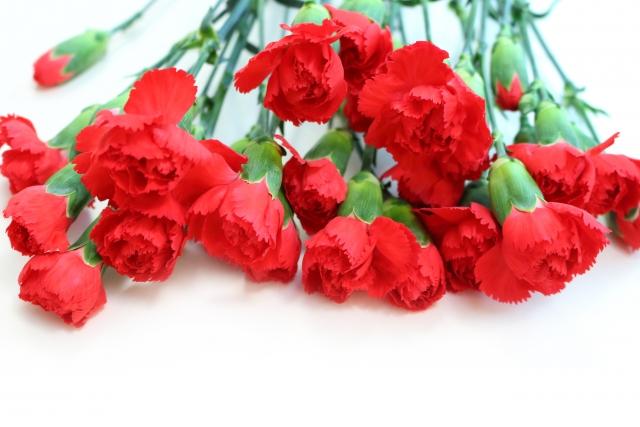 5月生まれの人に贈りたい花は?誕生日にピッタリな花言葉もご紹介