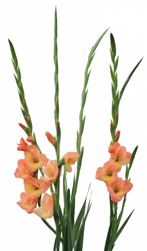 6月に咲く花と言えば何?花の特徴や花言葉も合わせてご紹介!