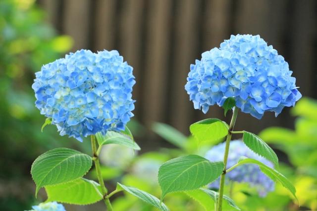 6月生まれの人に贈りたい花は?誕生日にピッタリな花言葉もご紹介