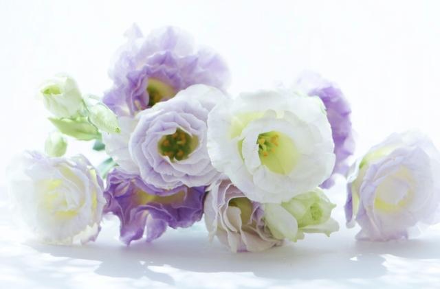 7月に咲く花と言えば何?花の特徴や花言葉も合わせてご紹介!