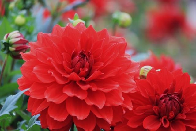 9月生まれの人に贈りたい花は?誕生日にピッタリな花言葉もご紹介