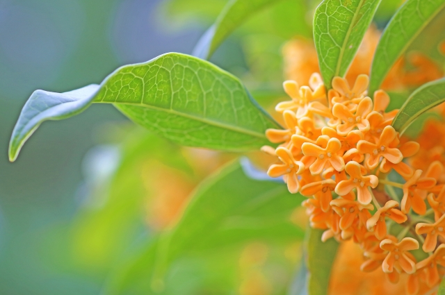 9月に咲く花と言えば何?花の特徴や花言葉も合わせてご紹介!