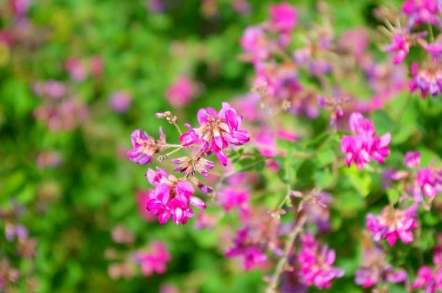 秋にはどんな花が咲く?秋に咲く花一覧