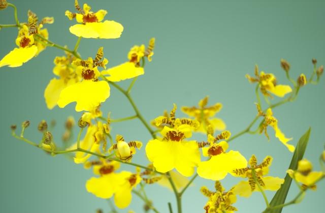 少し変わった花言葉を持つ花をまとめてご紹介!~秋の花編~