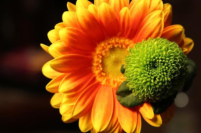 木瓜(ボケ) 花言葉