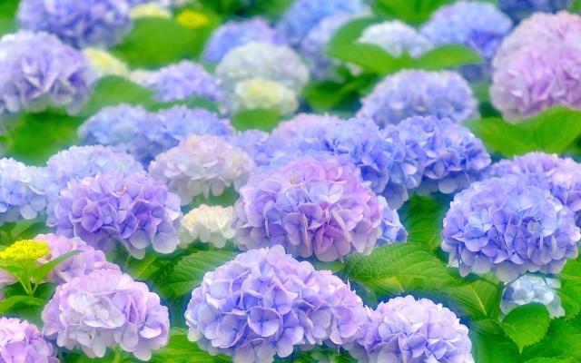 毒を持つ花を徹底リサーチしてご紹介!取り扱い注意の花とは?