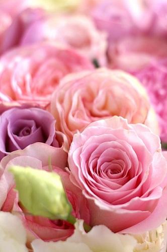 ドライフラワーにしやすい花にはどんな花があるの?