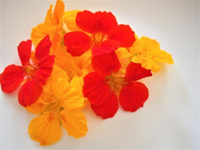 エディブルフラワーとは?通常の花との違いについて調べてみた!