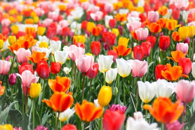 家の玄関に飾るのに適している花は何?