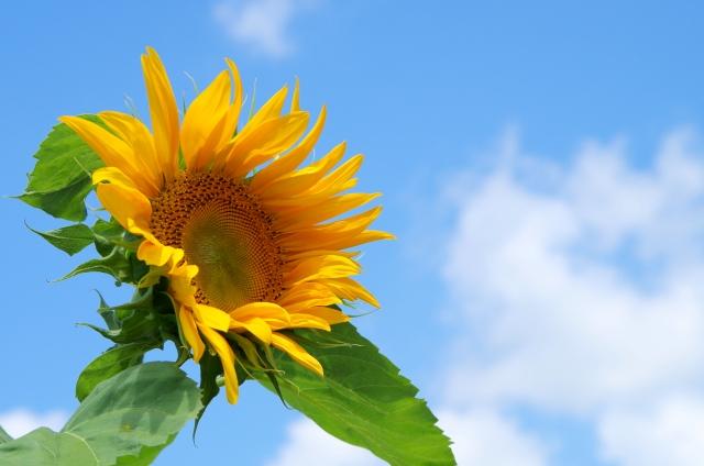 どうして花は枯れてしまうの?花が枯れてしまう原因と対策