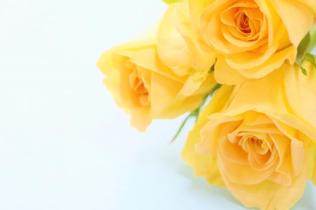 花言葉の由来って何?花言葉の由来と人気のある花の花言葉
