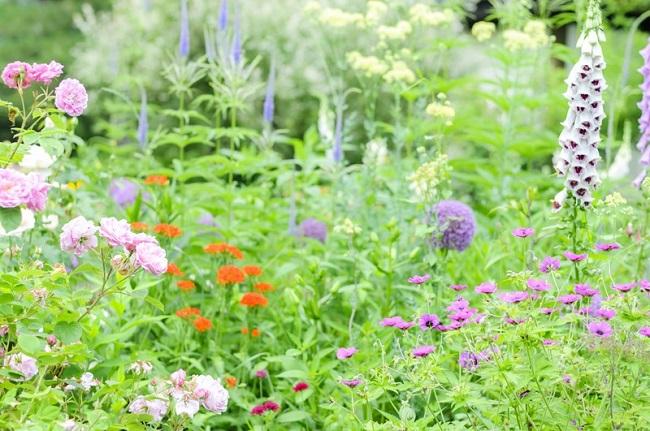 花に虫がついた時はどうすればいいの?花につく虫にはどんな虫がいるの?
