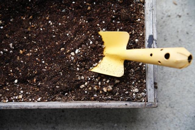 花を育てるのに必要なものは何?花を始めて育てる時の育て方