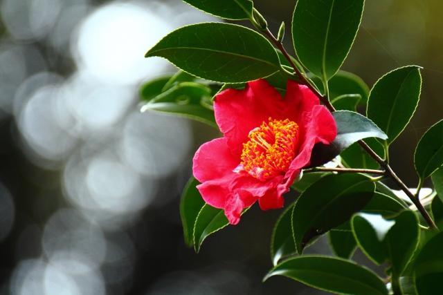 12月に咲く花と言えば何?花の特徴や花言葉も合わせてご紹介!