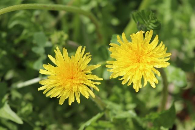 少し変わった花言葉を持つ花をまとめてご紹介!~春の花編~