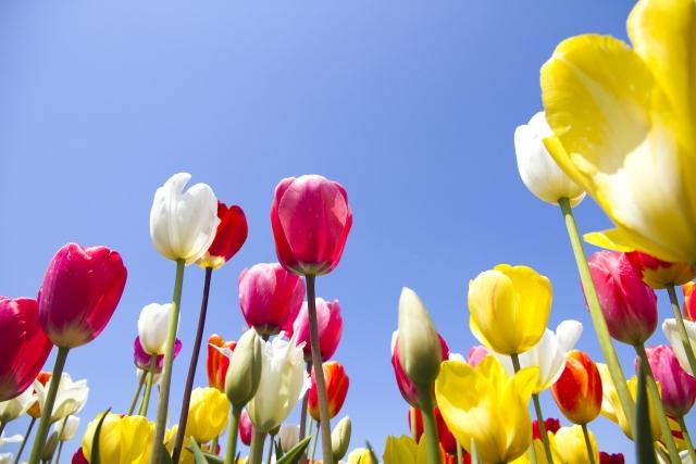 春に咲く花でガーデニング!人気の花をランキングでご紹介!