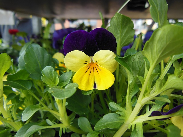 お部屋で育ててみたいお花たち~自然の力で防虫対策ができる~
