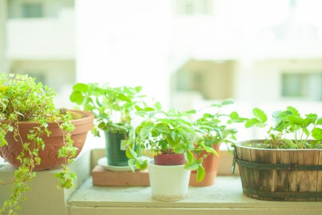 花を室内で育てたいけどどうやって育てればいいの?