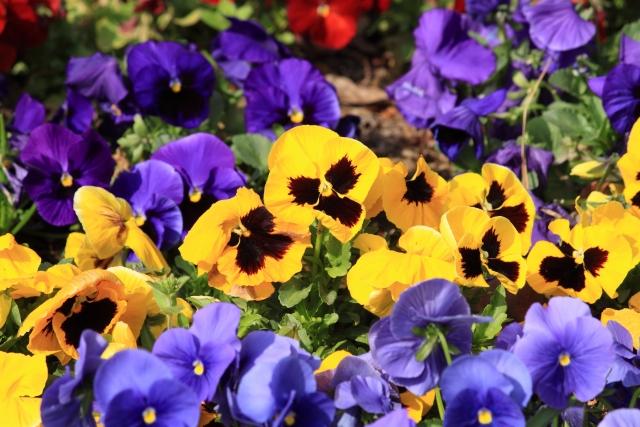 冬にはどんな花が咲く?冬に咲く花一覧