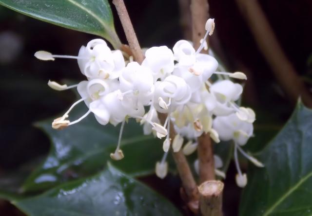 少し変わった花言葉を持つ花をまとめてご紹介!~冬の花編~