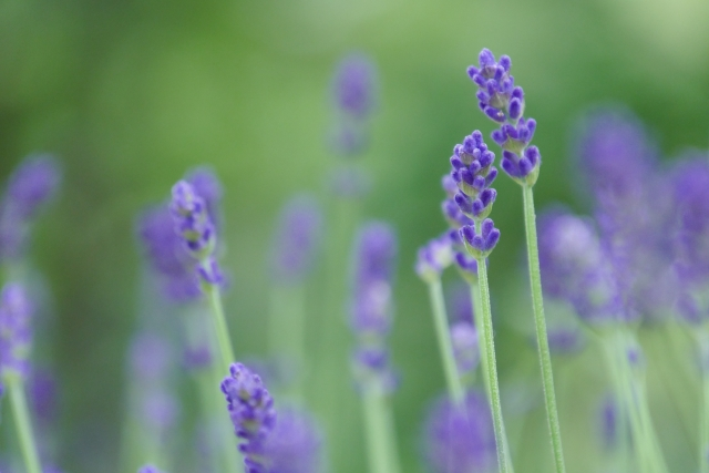 香りがある花~いい匂いがする花にはどんな花があるの?~