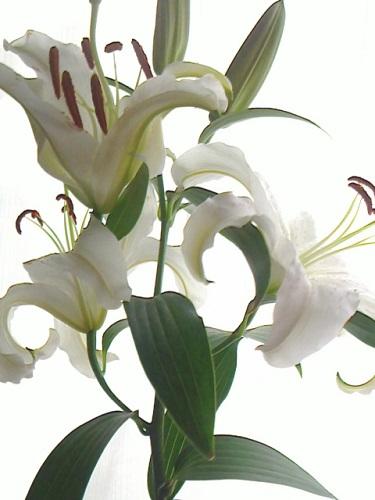 ジューンブライドにピッタリのお花は何?オススメのお花をご紹介!