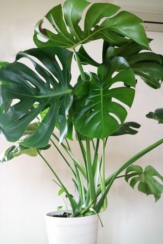 意外と知らない?プレゼントにオススメの観葉植物の花言葉をご紹介!