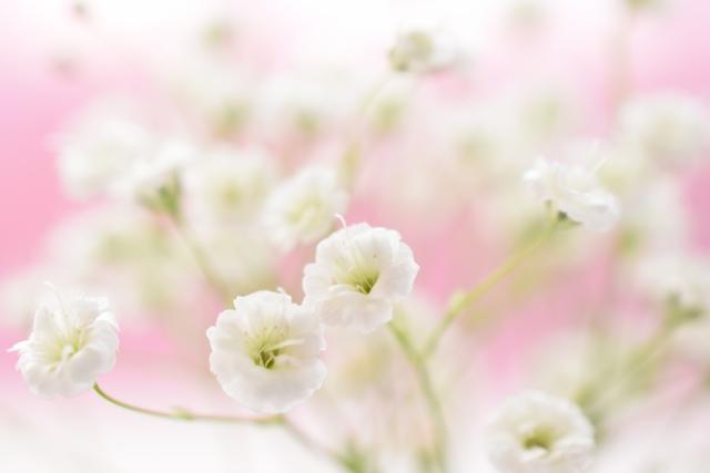 かすみ草(カスミソウ) 花言葉