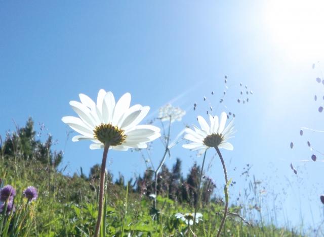 なかなか見ることが出来ない珍しい花にはどんな花があるの?