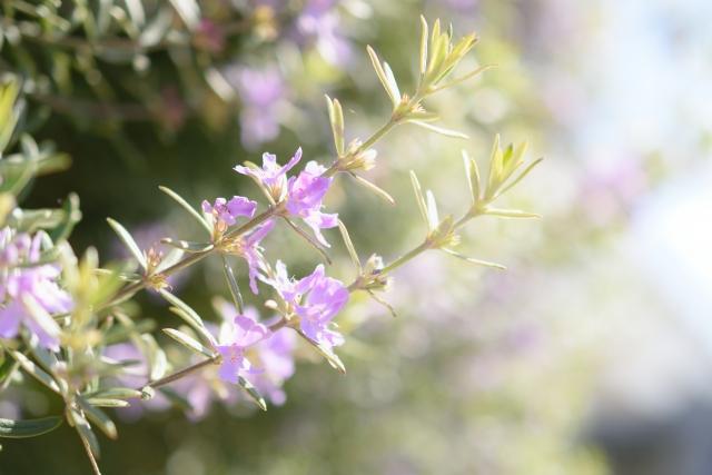 珍しい花の名前~花の名前にはどんな変わった名前があるの?~