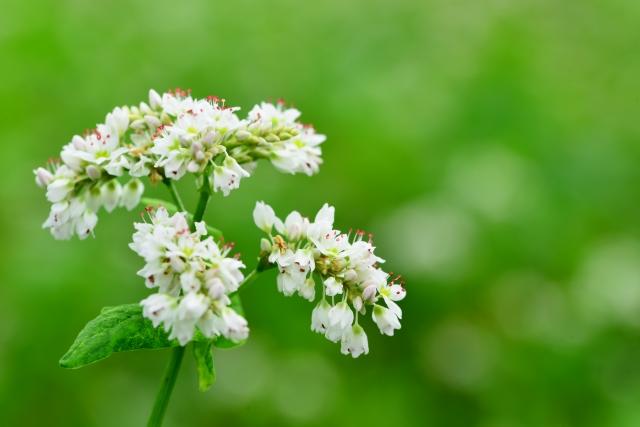 虫が嫌いでも育てられる花はあるの?虫よけ効果のある花