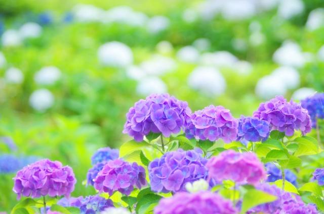今人気のある花は何?贈り物にぴったりの花の選び方