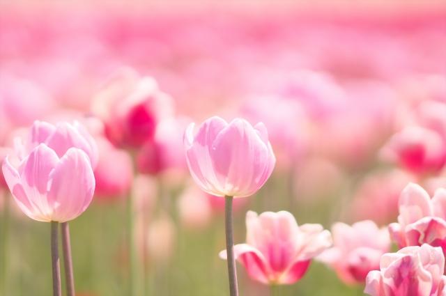 病院のお見舞いの花は何がいいの?おすすめの花とその理由