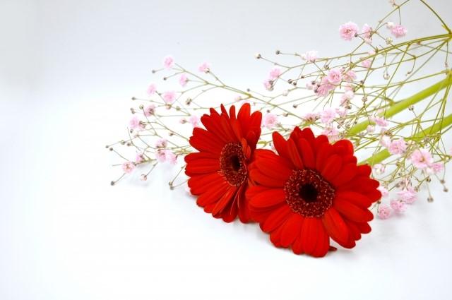 花言葉で人生が彩り始める!幸せを引き寄せる言葉を知ろう!