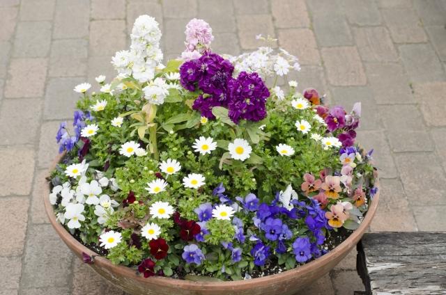 どんな花が育てやすいの?初心者にも育てやすい花一覧