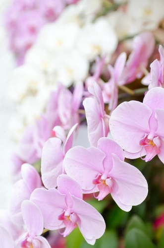 誕生花って何?10月の誕生花にはどんな花があるの?