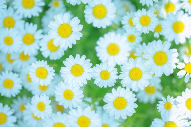 誕生花って何?1月の誕生花にはどんな花があるの?