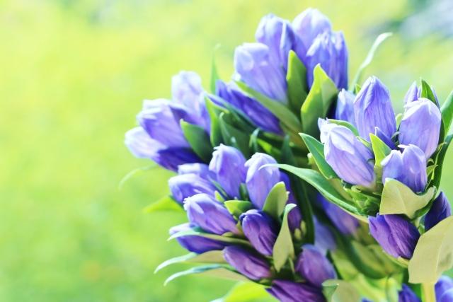 誕生花って何?11月の誕生花にはどんな花があるの?