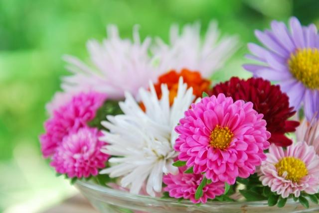 誕生花って何?4月の誕生花にはどんな花があるの?